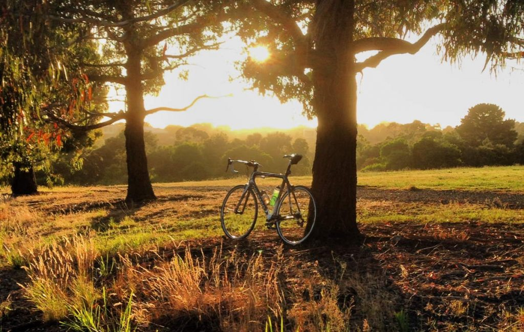 Can cycling help with grief and depression? A Colnago road bike under a tree